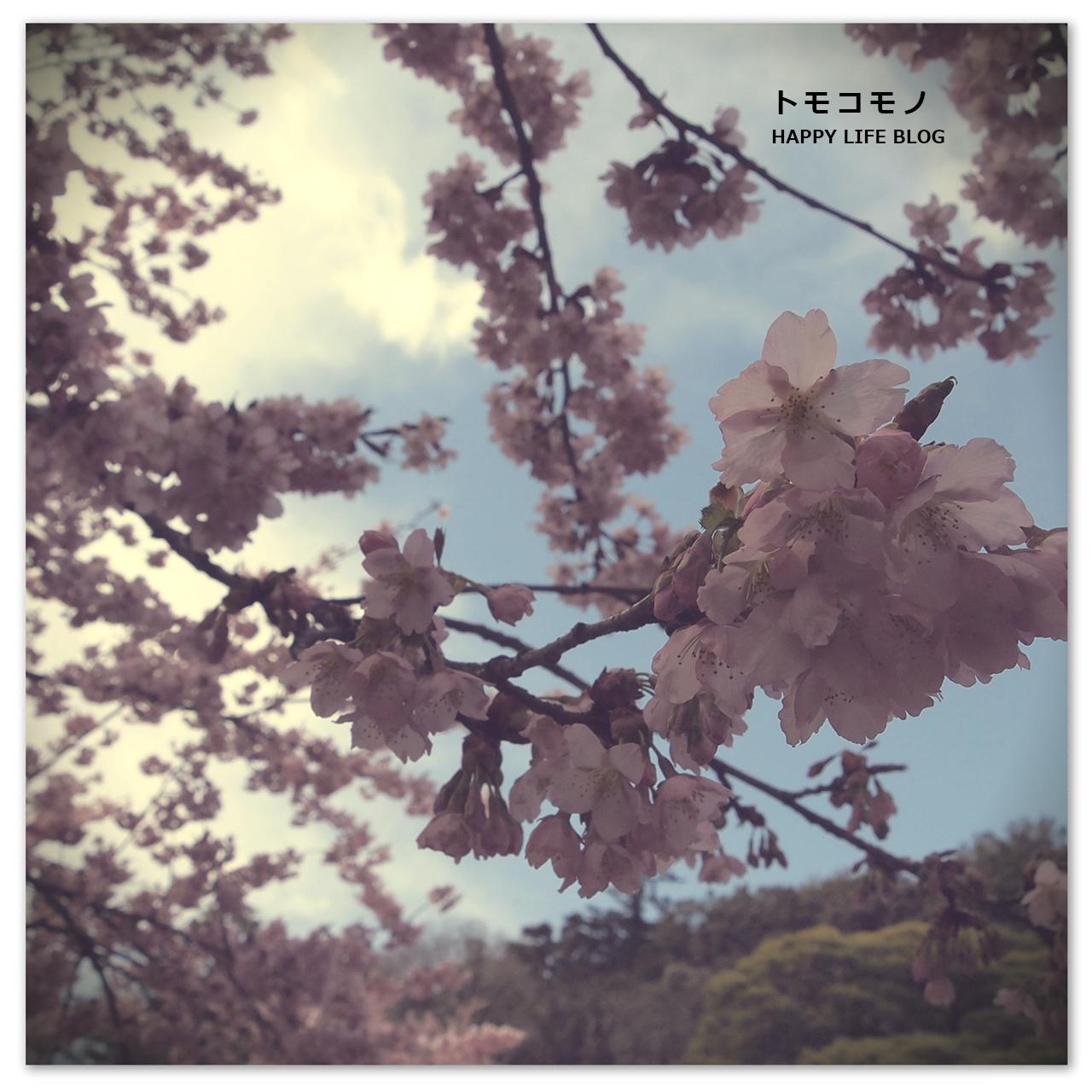 春を感じる修善寺散策してきました。