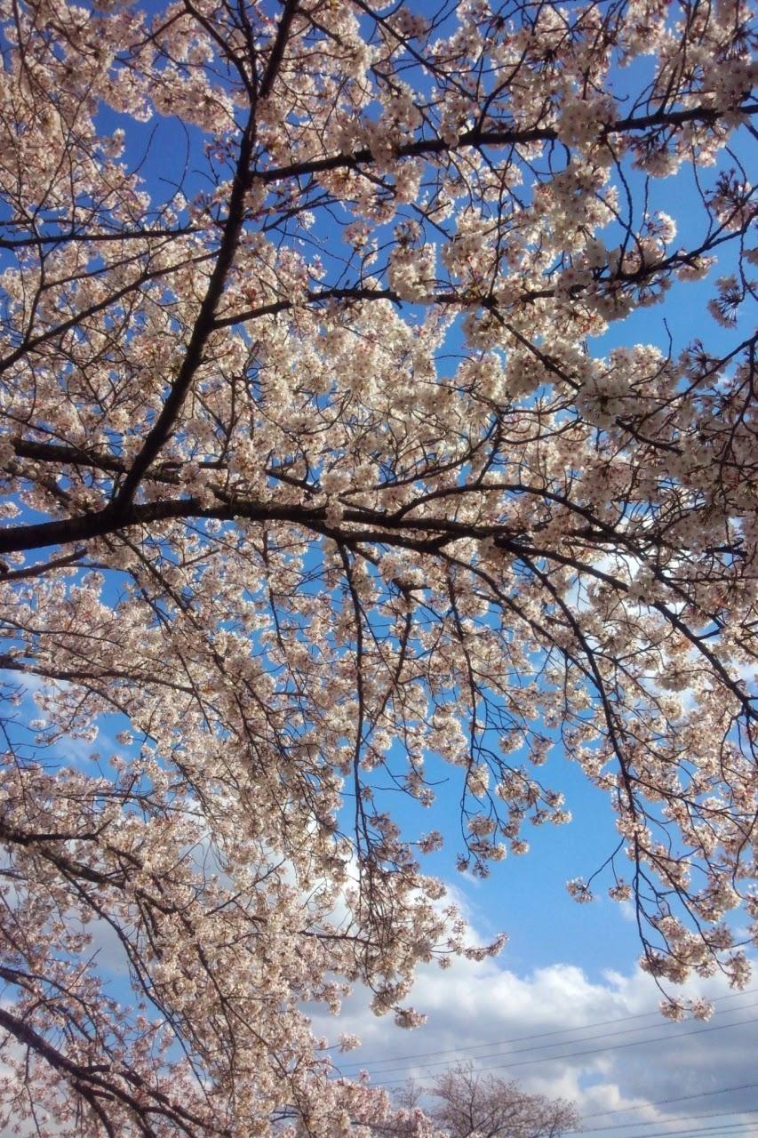 桜もほんとにあっという間ですね