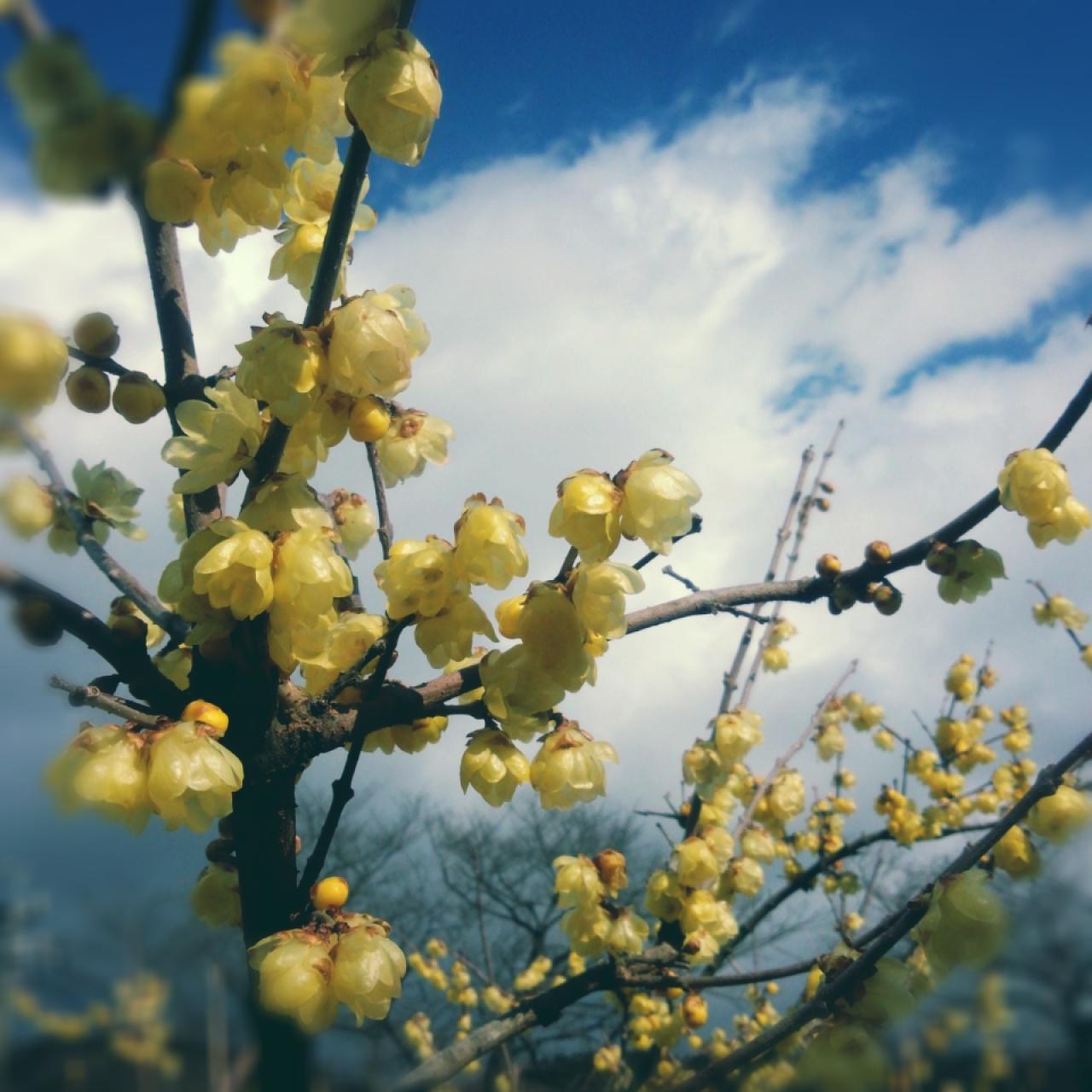 東谷山フルーツパークで春探し