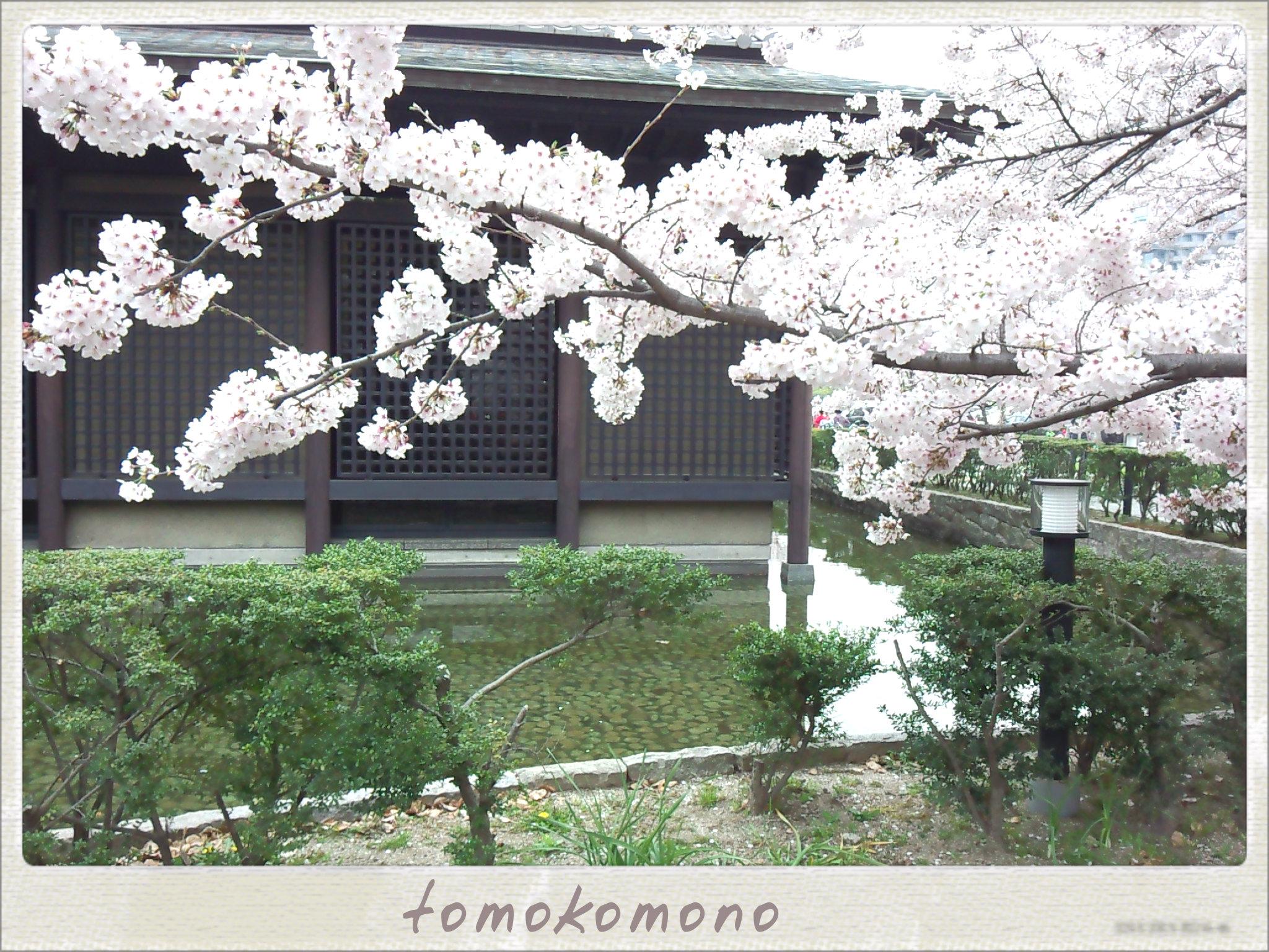 お花見さんぽ★名古屋城~能楽堂~名城公園彫刻の森
