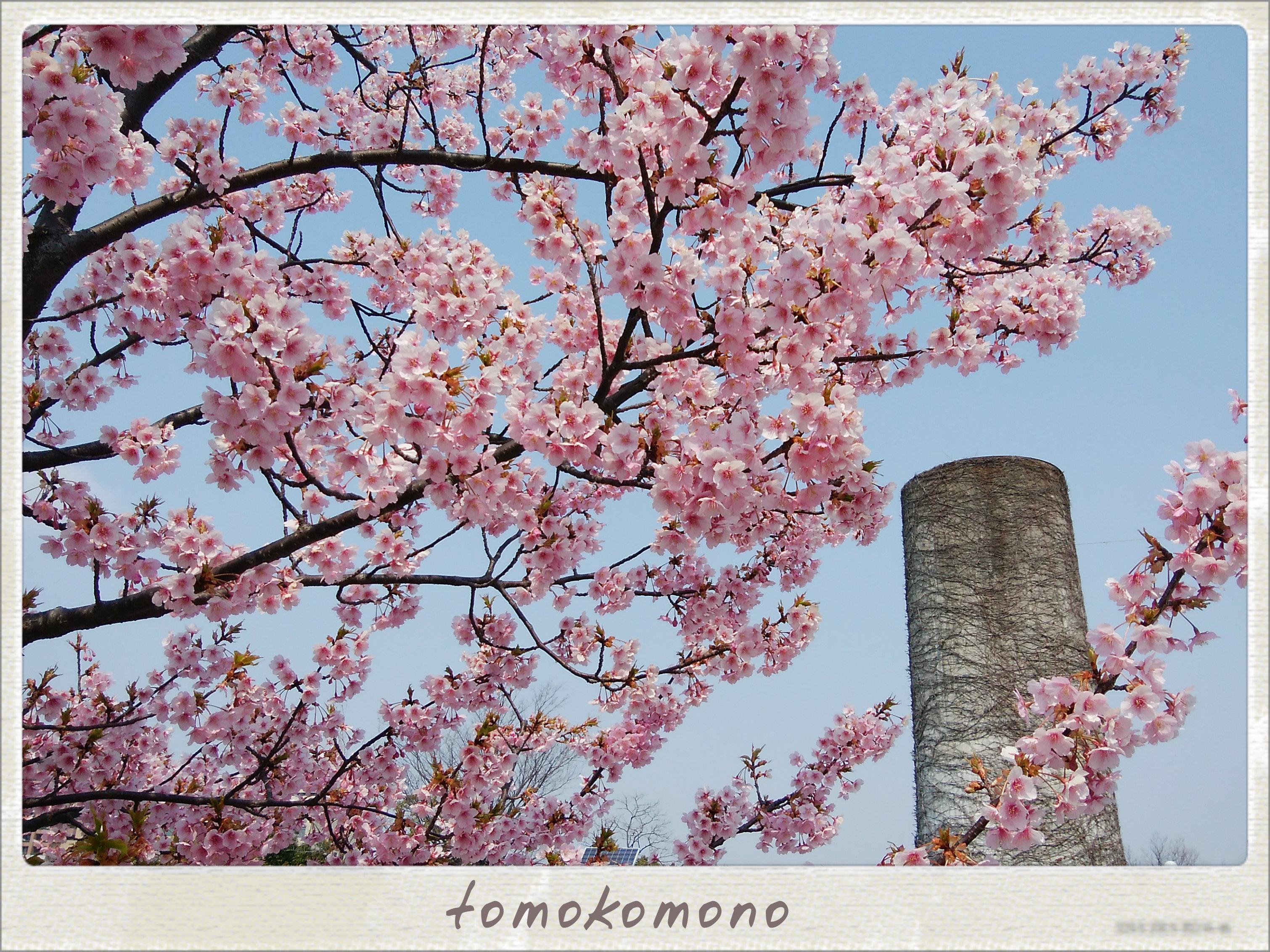ノリタケの森の桜と名古屋城の梅