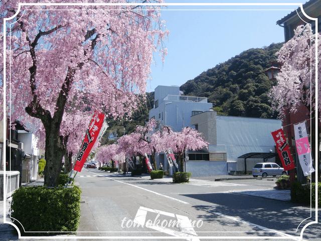 吉照庵の近くの桜並木